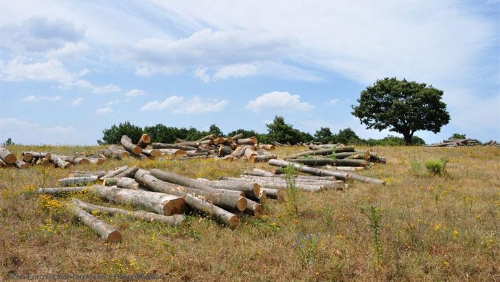 madera turquia
