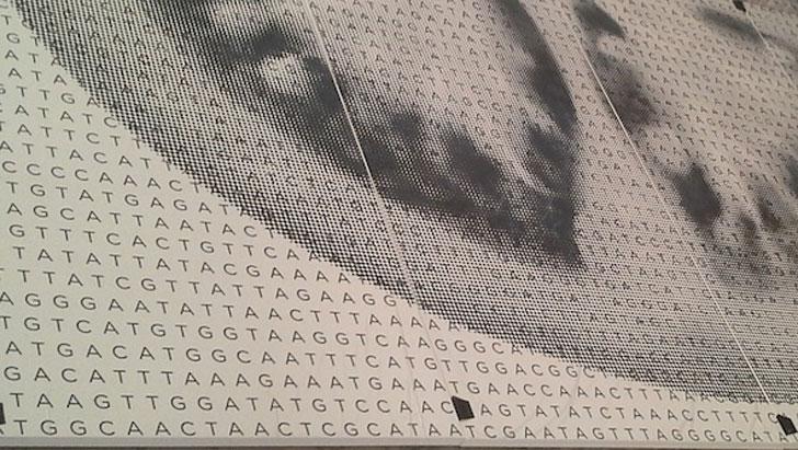 Genoma del tomate en placas Dekton