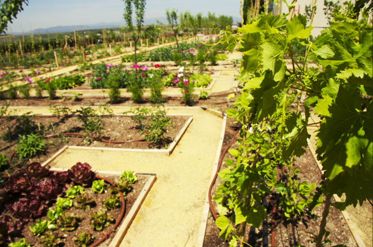 Murcia imparte cursos para fomentar la creación de huertos ecológicos.