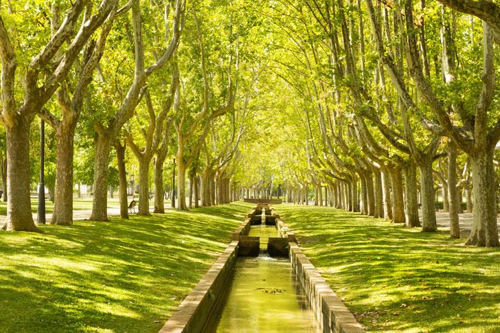 Parque de Zaragoza. Debate sobre el presente y futuro de las infraestructuras verdes.