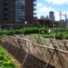 Acuerdo para implantar de Huertos Urbanos en Rincón de la Victoria
