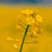 Gas Natural Fenosa galardonada como empresa Gold Class por el Anuario de la Sostenibilidad