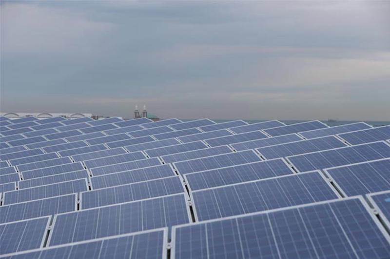 Sobre el tejado del Abbot Oceanarium, situado en Shedd Aquarium, ya se han instalado 913 paneles solares, junto a otras medidas de eficiencia energética con las que se quiere reducir el consumo energético de toda la instalación en un 50% en 2020.