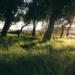 El ecobarrio La Pinada, iniciativa seleccionada por Europa para su programa contra el Cambio Climático