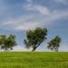 Gran acogida de los cursos de liderazgos verdes dentro del proyecto de Economía Verde y Circular Extremadura 2030