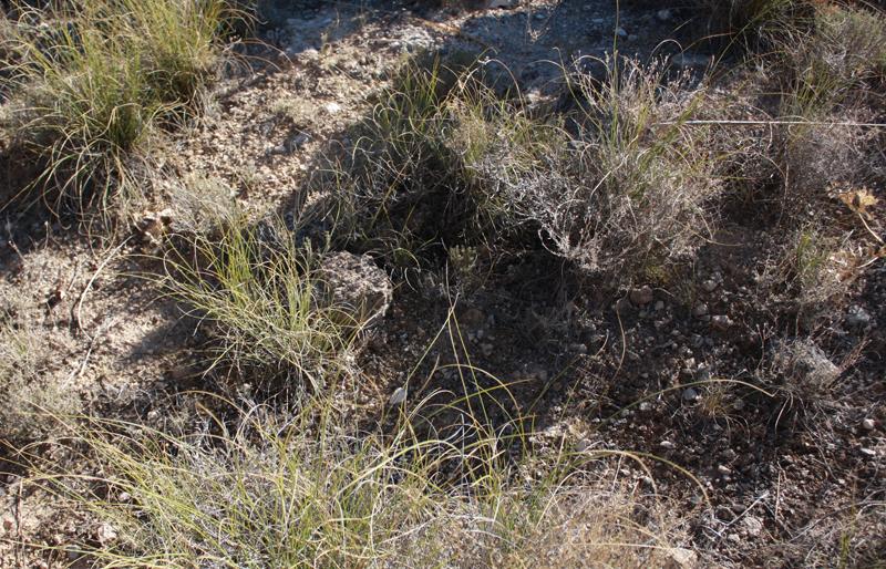 Recuperación de paisajes en la cantera de Yepes-Ciruelos (Toledo).