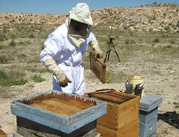 Apicultor recogiendo la miel.