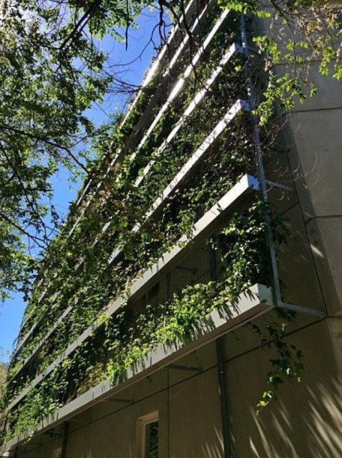 Figura 5. Fachada vegetal Edificio Pez Austral.