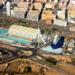 La Generalitat Valenciana aprueba la Rehabilitación y Regeneración del parque público de viviendas sociales