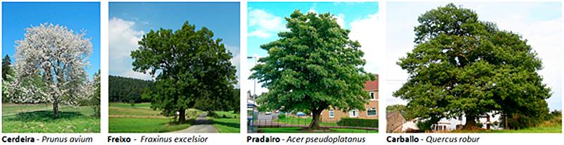 Figura 2. Especies frondosas autóctonas (Fuente: Lugo + Biodinámico).
