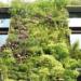 Investigadores demuestran que los Jardines Verticales son una solución efectiva para los climas mediterráneos