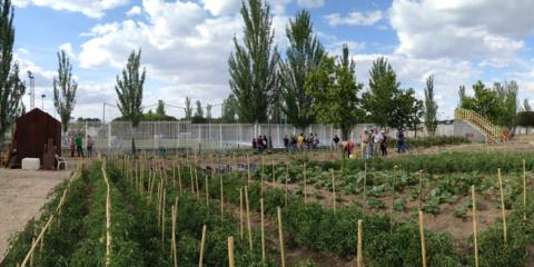 El Ayuntamiento de Madrid habilita 27 nuevas parcelas para huertos urbanos