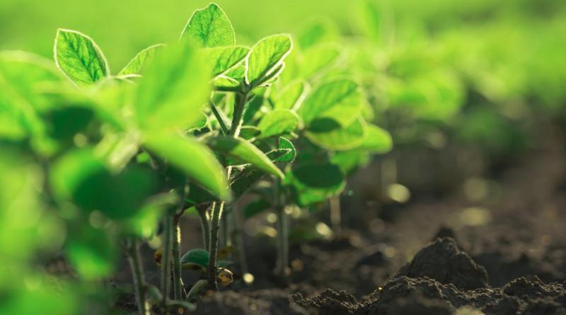 Plantas desarrollo sostenible