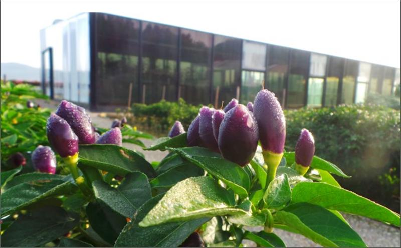 Plantas en el exterior del edificio Restaurante Azurmendi
