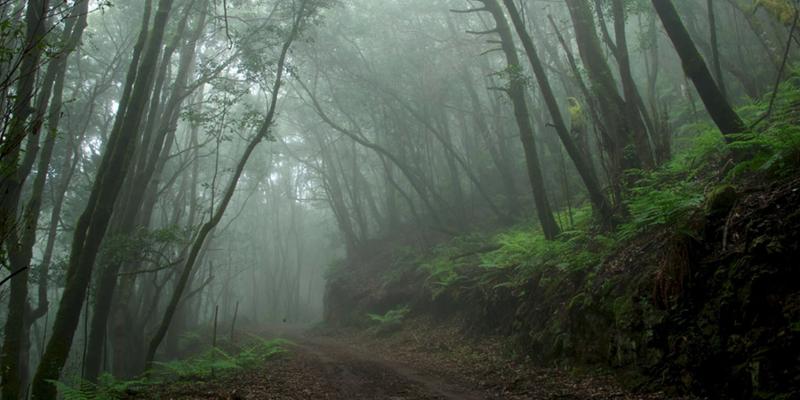 bosque la gomera