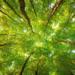 Concluye el proyecto 'Emplea Madera', creado para impulsar el uso de madera en la construcción sostenible