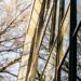 Dos empresas suecas comprobarán la posibilidad de alimentar con energía solar los cristales dinámicos