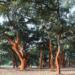 Nueva generación de pavimentos de corcho sostenible Wise de Amorim con huella de carbono negativa