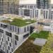 Nace la iniciativa Terrats Verds para promover las cubiertas verdes con huerto urbano en Barcelona