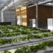 El proyecto europeo Groof abre la convocatoria para impulsar proyectos de invernaderos en cubiertas de edificios
