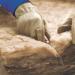 La compañía Knauf Insulation da a conocer toda la gama de aislamiento sostenible de lana mineral