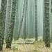 Un proyecto científico evaluará métodos de adaptación de la industria de madera a los efectos del cambio climático