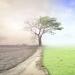El Parlamento Europeo declara la emergencia climática y ambiental a nivel global