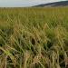 El proyecto LIFE ReNatural NZEB desarrollará la construcción de EECN con materiales naturales y locales