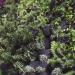 Valencia instala un jardín vertical en una escuela para regular la temperatura y mejorar el aislamiento acústico