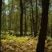 Galicia recibe la certificación FSC para tres de sus montes, un avance en el desarrollo sostenible de su gestión forestal