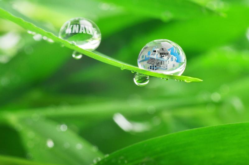 gotas de agua sobre vegetación