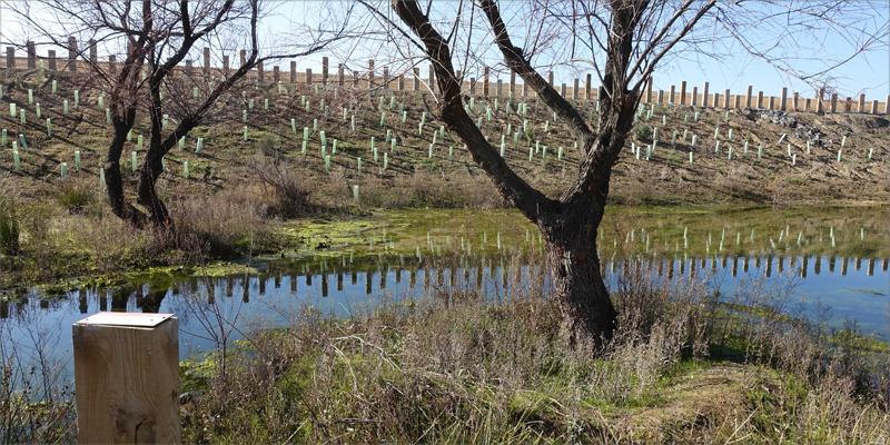 Balsa generada en Plataforma Central Iberum en Illescas (Toledo) como sistema de reutilización de aguas pluviales para el riego.