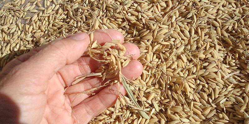 La adición del 5% de nanopartículas procedentes de residuos del arroz optimiza las propiedades funcionales del fibrocemento.