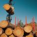 ChainWood, tecnología blockchain para una gestión más eficiente de la madera