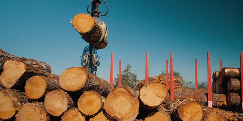 gestión de la madera