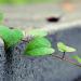 LafargeHolcim impulsa la construcción ecológica en el sector cementero junto a SBTi