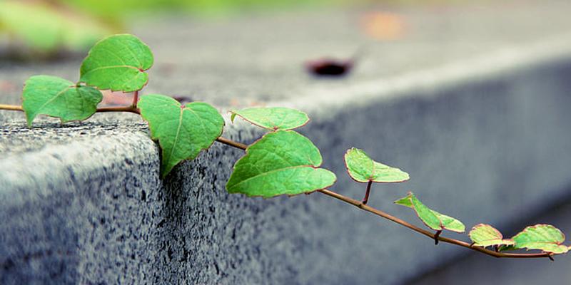 imagen aludiendo a cemento verde