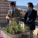 El Gobierno de Murcia impulsa la implantación de cubiertas verdes en edificios públicos