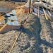 Baleares utiliza una planta marina como material de aislamiento en la construcción de viviendas