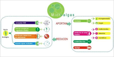 Fotobiorreactores urbanos de algas para la ciudad verde: reinterpretando el laberinto