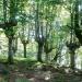 El Gobierno Vasco subvencionará más de 160 proyectos locales de desarrollo sostenible