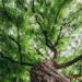 Acuerdo provisional sobre la Ley Europea del Clima para reducir las emisiones al menos un 55% en 2030