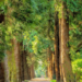 El proyecto europeo Basajaun busca optimizar el consumo de la madera sostenible en la construcción