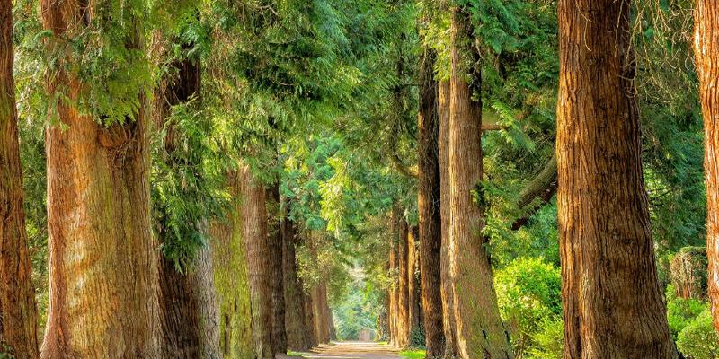 bosque gestión forestal sostenible