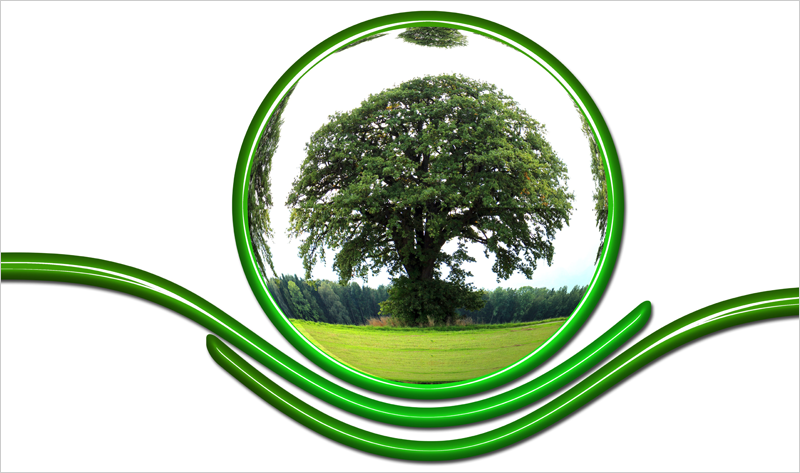 árbol biodiversidad