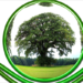La Convocatoria del Pacto Verde Europeo selecciona 72 proyectos de investigación e innovación