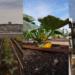 Huerto urbano en la cubierta de la Óperade laBastilla de París con el sistema de vegetalización Oasis de CleverGreen-Vegetal iD