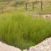 El proyecto LIFE Green Adapt busca aumentar la resiliencia del sector de los residuos al cambio climático