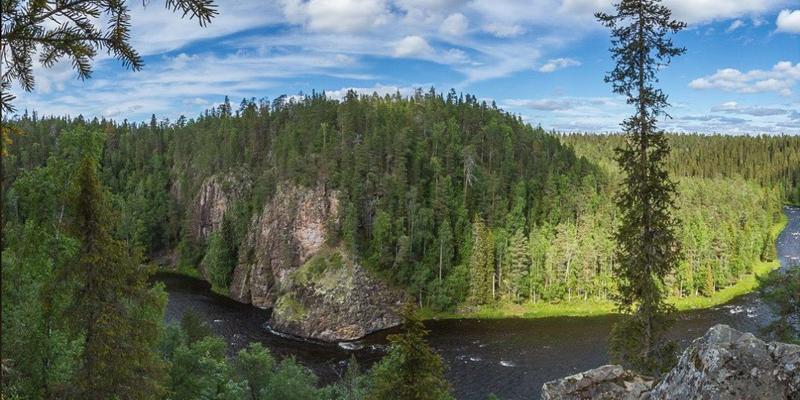 bosque nórdico