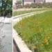 Huesca recibe un premio de buenas prácticas de biodiversidad por su proyecto de naturalización urbana